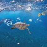 Biển ngập rác thải