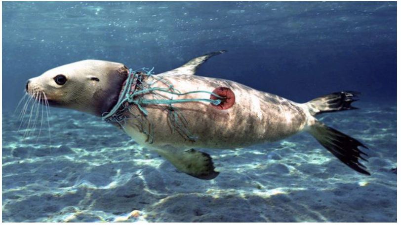 image - RÁC Ở ĐẠI DƯƠNG VÀ BẢO VỆ MÔI TRƯỜNG THỜI COVID - rác thải nhựa, đặng thị như hà, bảo vệ môi trường - cuoc-song